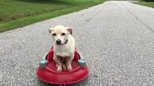 Dog Riding A Vintage Radio Flyer Saucer
