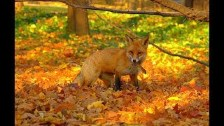 AUTUMN SCENES and ANIMALS ~ Happy Equinox Septembe...
